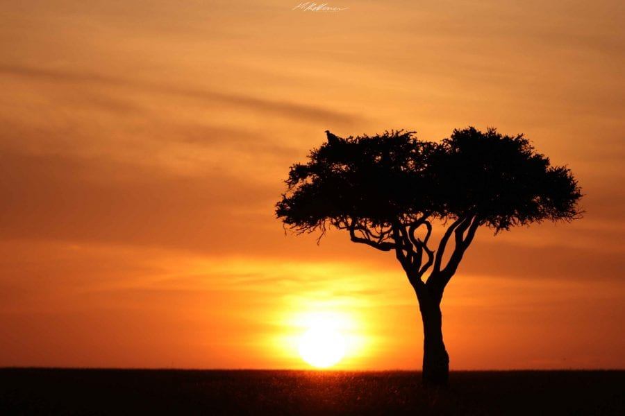 https://discoverafricaa.com/wp-content/uploads/2020/04/Mara-Sunset-Discover-Africa-Favorite-2-scaled.jpg