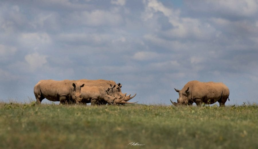 https://discoverafricaa.com/wp-content/uploads/2020/04/Solio-Game-Reserve-White-Rhinos-1-scaled.jpg