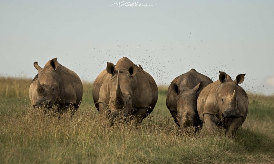 https://discoverafricaa.com/wp-content/uploads/2020/04/Solio-Game-Reserve-White-Rhinos-scaled.jpg