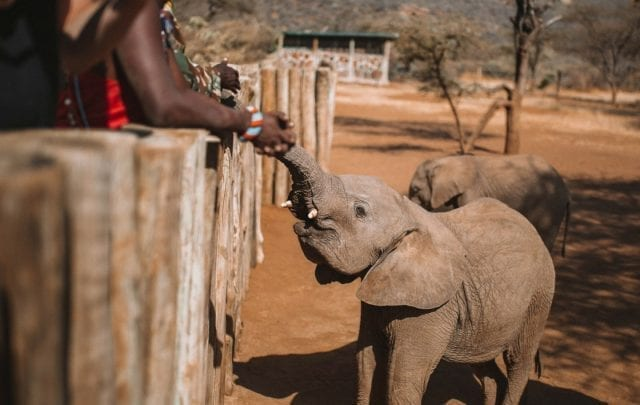 5 Best Elephant Sanctuary to Visit in Africa.