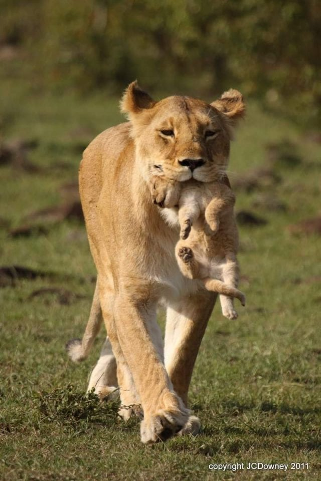 10Best Wildlife Photos to Celebrate Mothers Day