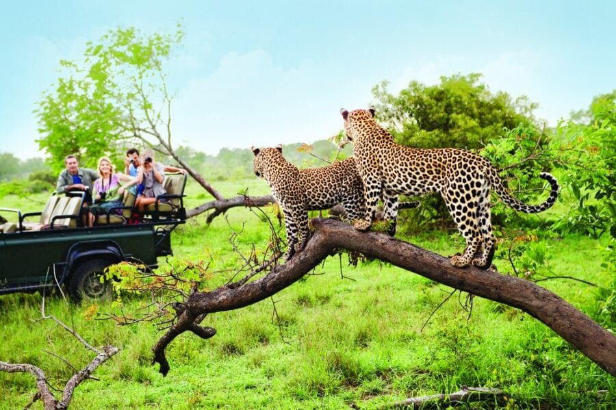 Safaris-1024x682-1-scaled.jpg