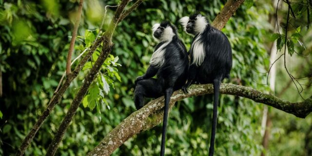 Rwanda Reopens For Tourism
