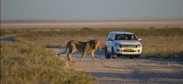 Kruger National Park Open to Self Drive Day Visitors