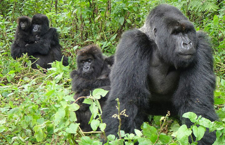 3-Days-Bwindi-Gorilla-Safari-from-Kigali.jpg